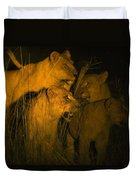 Lions At Night Duvet Cover by Carson Ganci