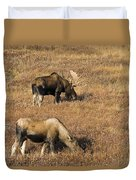 Male And Female Moose Alces Alces In Duvet Cover by Philippe Widling