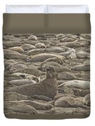 Male Elephant Seal Barking Amidst Duvet Cover by Robert Postma