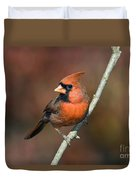 Male Northern Cardinal - D007813 Duvet Cover by Daniel Dempster