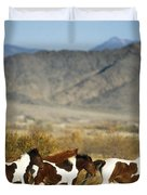 Mustangs Duvet Cover by Mark Newman and Photo Researchers