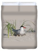 Nesting Common Tern Duvet Cover by Clarence Holmes