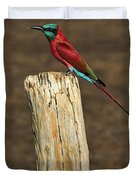 Northern Carmine Bee-eater Duvet Cover by Tony Beck