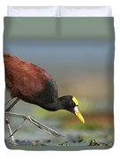Northern Jacana Foraging Costa Rica Duvet Cover by Tim Fitzharris