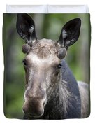One Year Old Bull Moose With Growing Duvet Cover by Philippe Henry