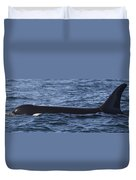 Orca Orcinus Orca Surfacing Showing Duvet Cover by Matthias Breiter
