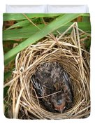 Red-winged Blackbird Baby In Nest Duvet Cover by J McCombie