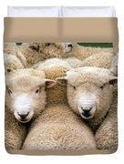 Romney Sheep Duvet Cover by Gregory G Dimijian and Photo Researchers