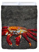 Sally Lightfoot Crab Duvet Cover by Tony Beck