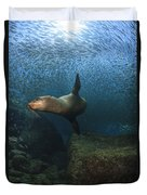 Sea Lion Chasing A School Of Bait Fish Duvet Cover by Todd Winner