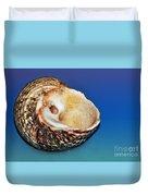 Seashell Wall Art 2 Duvet Cover by Kaye Menner