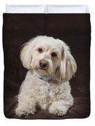 Shih Tzu-poodle On A Brown Muslin Duvet Cover by Corey Hochachka