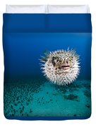 Spotted Porcupinefish II Duvet Cover by Dave Fleetham