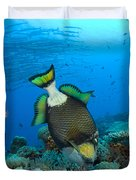 Titan Triggerfish Picking At Coral Duvet Cover by Steve Jones