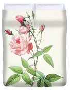 Rosa Indica Vulgaris Duvet Cover by Pierre Joseph Redoute