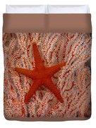Thailand, Marine Life Duvet Cover by Dave Fleetham - Printscapes