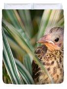 Baby Bird Peering Out Duvet Cover by Douglas Barnett