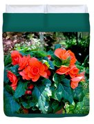 Begonia Plant Duvet Cover by Corey Ford
