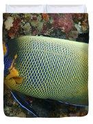 Blue Face Angelfish Duvet Cover by Steve Rosenberg - Printscapes