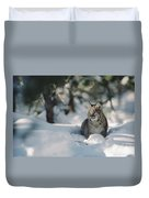 Bobcat Lynx Rufus Adult Resting In Snow Duvet Cover by Michael Quinton