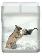 Bobcat Lynx Rufus Capturing Muskrat Duvet Cover by Michael Quinton