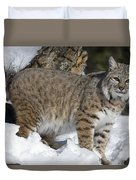 Bobcat Lynx Rufus In The Snow Duvet Cover by Matthias Breiter