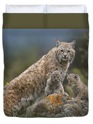 Bobcat Mother And Kittens North America Duvet Cover by Tim Fitzharris
