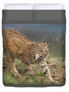 Bobcat Stalking North America Duvet Cover by Tim Fitzharris