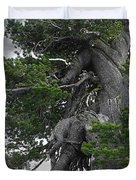 Bristlecone Pine tree on the rim of Crater Lake - Oregon Duvet Cover by Christine Till
