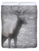 Buck in Fog on Hurricane Ridge - Olympic National Forest - Olympic National Park WA Duvet Cover by Christine Till