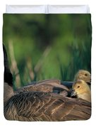Canada Goose With Goslings Duvet Cover by Alan and Sandy Carey and Photo Researchers