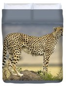 Cheetah Acinonyx Jubatus On Termite Duvet Cover by Winfried Wisniewski