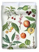 Cherries And Other Fruit-bearing Trees  Duvet Cover by Elizabeth Rice