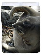 Elephant Seal Duvet Cover by Ernie Echols
