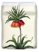 Fritillaria Imperialis Duvet Cover by Pierre Joseph Redoute