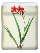 Gladiolus Cardinalis Duvet Cover by Pierre Joseph Redoute