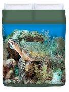 Green Sea Turtle On Caribbean Reef Duvet Cover by Karen Doody