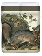 Grey Fox Duvet Cover by John James Audubon