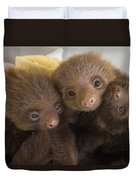 Hoffmanns Two-toed Sloth Choloepus Duvet Cover by Suzi Eszterhas
