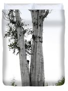Life at the Top - Duncan Cedar Olympic National Park WA Duvet Cover by Christine Till