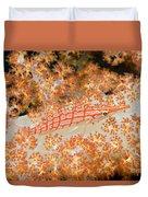 Longnose Hawkfish Duvet Cover by Dave Fleetham - Printscapes