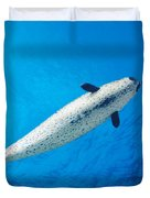 Male Narwhal Duvet Cover by Dave Fleetham - Printscapes