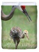 Mama And Juvenile Sandhill Crane Duvet Cover by Carol Groenen