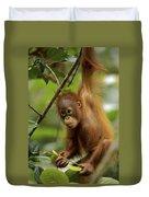 Orangutan Pongo Pygmaeus Baby Swinging Duvet Cover by Christophe Courteau