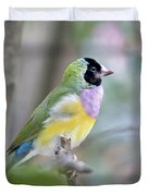 Perched Gouldian Finch Duvet Cover by Glennis Siverson