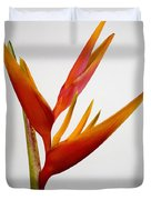 Red Heliconia Duvet Cover by Tomas del Amo - Printscapes