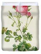 Rosa Centifolia Bipinnata Duvet Cover by Pierre Joseph Redoute