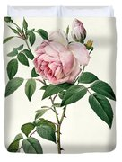 Rosa chinensis and Rosa gigantea Duvet Cover by Joseph Pierre Redoute