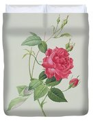 Rosa Indica Cruenta Duvet Cover by Pierre Joseph Redoute