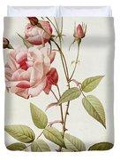 Rosa Indica Vulgaris Duvet Cover by Pierre Joseph Redoute